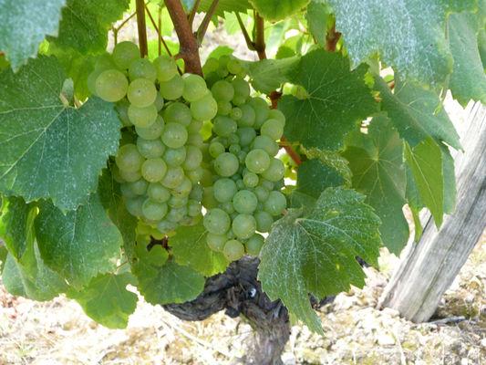 (5)vigne-en-loir-et-cher