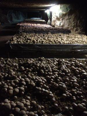 Caves Champignonnières Villavard (4)