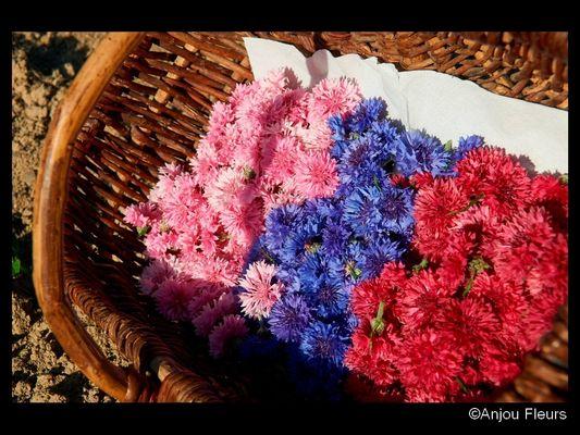DEG-anjou-fleurs-02
