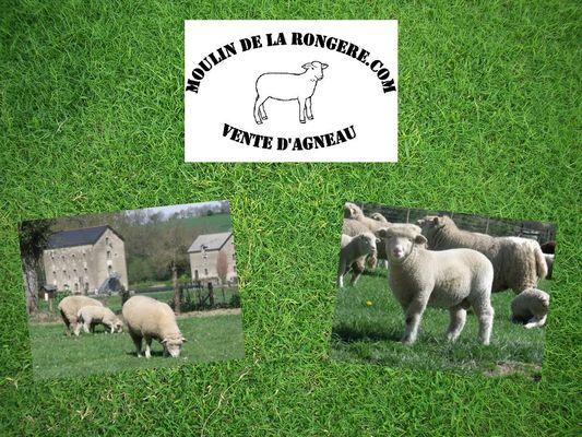 DEG-agneau-fermier-53-01