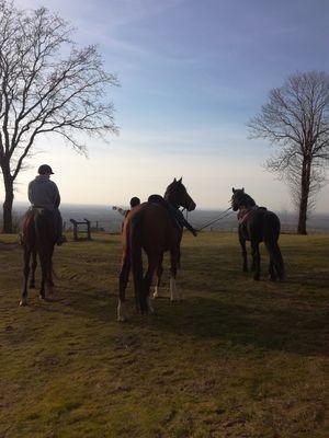 Balade à cheval au Montaigu