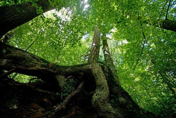 arboretum-de-pontmain-pontmain-53-pcu (2)