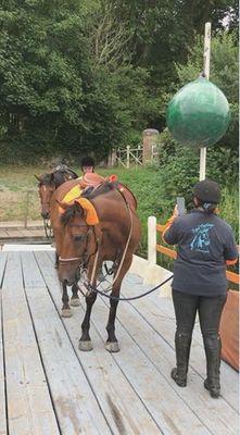 bac mayenne ménil chevaux