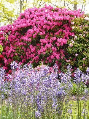 jardins-des-renaudies-colombiers-du-plessis-53-pcu-36