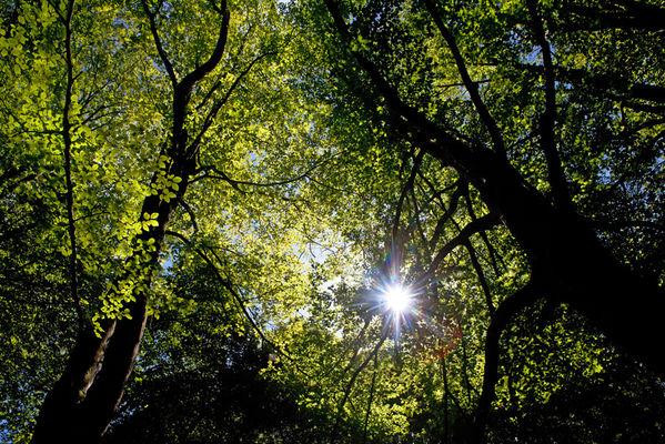 sentier-d-interpretation-arboretum-pontmain-53-iti-cp greboval (4)