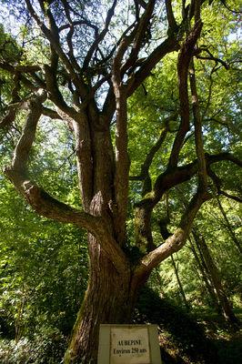 sentier-d-interpretation-arboretum-pontmain-53-iti-cp greboval (9)