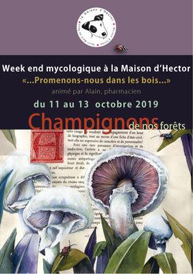 WE-Champignons-Maison d'HEctor-2019