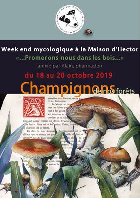 WE-Champignons-RECTO-2019-(2)