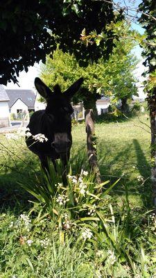 bricqueville-sur-mer-gite-des-salines (9)