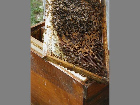 ecomusee_apiculture10_800