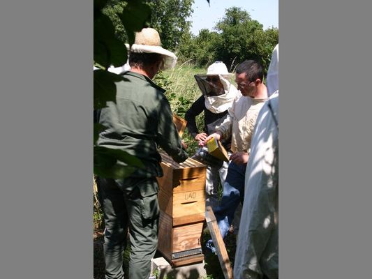 ecomusee_apiculture12_800