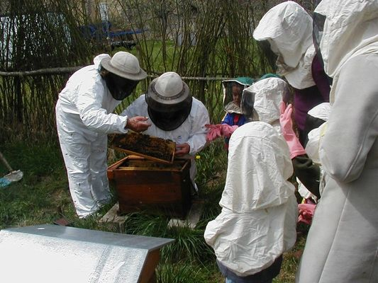 ecomusee_apiculture16_800