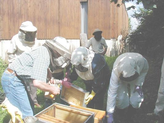 ecomusee_apiculture2_800