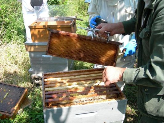 ecomusee_apiculture6_800