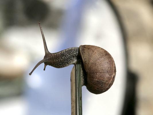 Escargots du Perche - Préaux du Perche