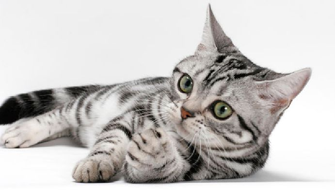 exposition feline