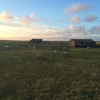 moutons©valerie-aubert