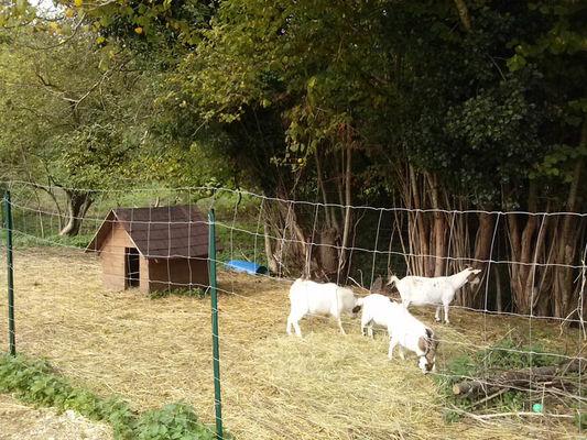 Les Petits Cavaliers - La Chapelle Montligeon