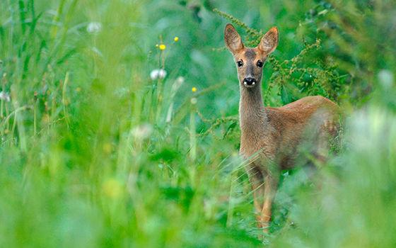 2016-parc-animalier-pyrenees-05-argeles-gazost