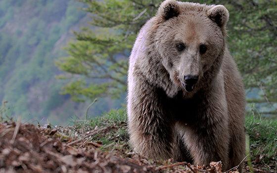 2016-parc-animalier-pyrenees-03-argeles-gazost