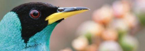 2020-Expo-PNP-oiseaux-Guyane