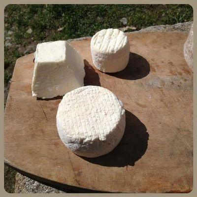 Les fromages Le Pitou