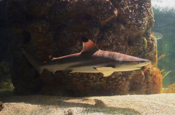 AquariumTropical4-pierrefittenestalas-HautesPyrenees