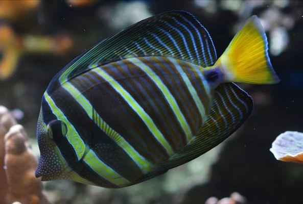 AquariumTropical7-pierrefittenestalas-HautesPyrenees