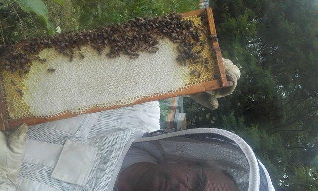 DEGMIP065V5006V5 - Le rucher arrensois - le cadre et les abeilles