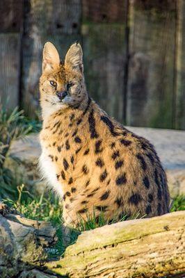 LOIMIP065V502RA7-Zoo Asson-09032014-09032014145
