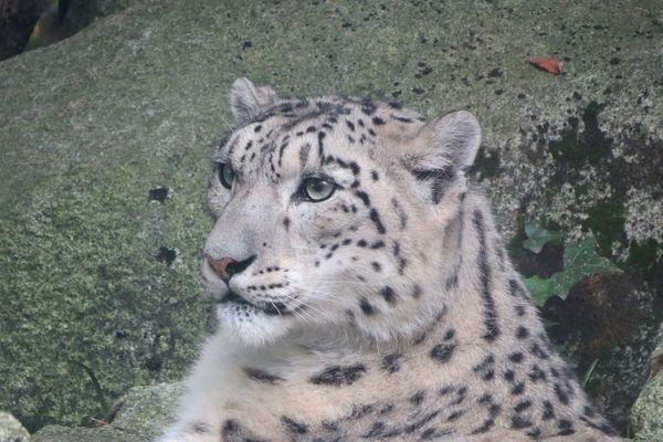 Zoo_Asson_iris reduit