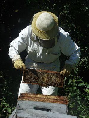 apiculteur2mielleriedesescales-villelongue-HautesPyrenees.jpg