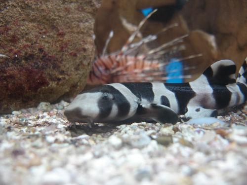 aquariumtropical6-pierrefittenestalas-HautesPyrenees