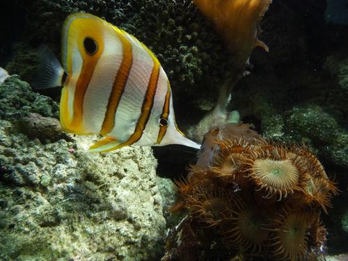 aquariumtropical8-pierrefittenestalas-HautesPyrenees