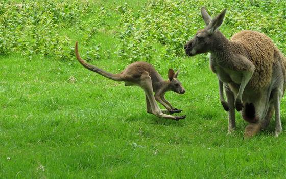 bébé-zoodasson
