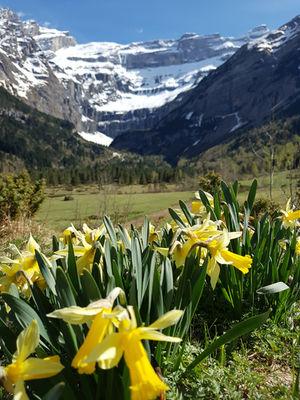 fleurs3-deffarge-argelesgazost-HautesPyrenees