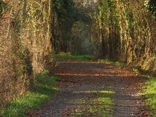 les chemins creux de St denis d'Anjou