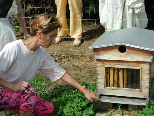 DEG53-la-ferme-des-abeilles-5