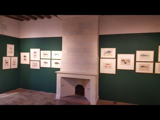PCU-musee-d-art-et-d-histoire-chateau-gontier-14