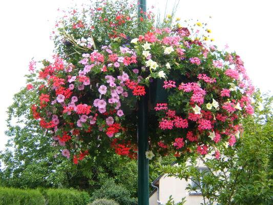 fleurissement 074