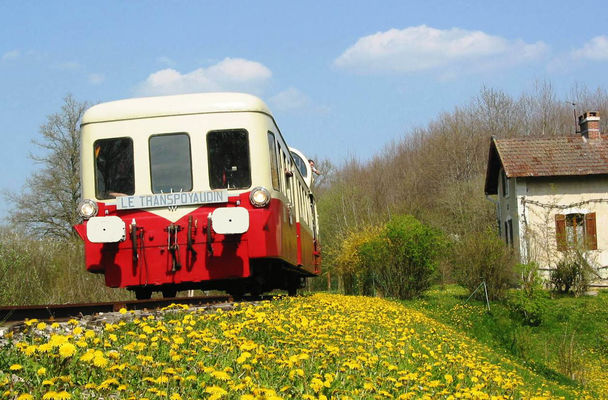 X3835 et parterre de fleurs jaunes pissenlits