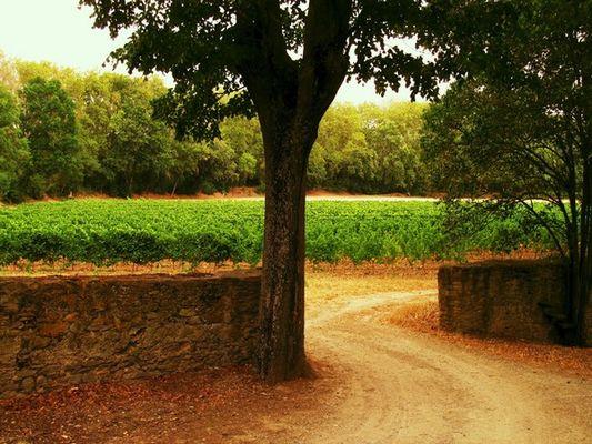 Villemoustaussou Domaine La Mijane (1)
