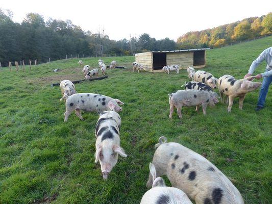 Ferme d'Argentel Coquainvilliers prés de Lisieux élevage en plein air