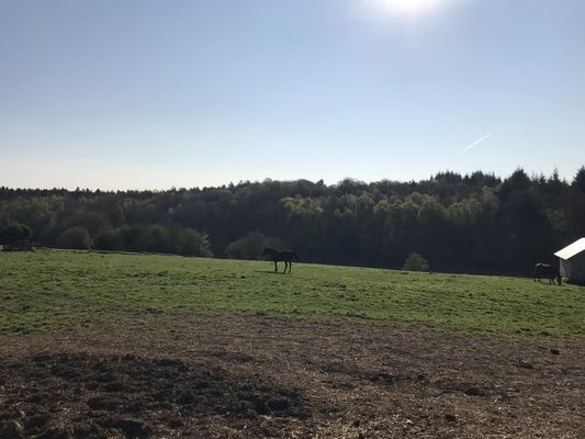 Gite-du-Haras-St-M-de-B-Vue-sur-les--chevaux