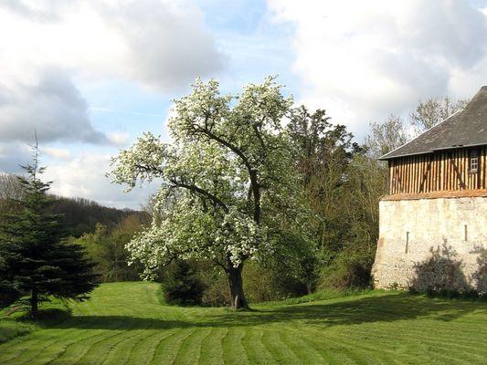 La Ferme du Chateau - gite - Philippe Gurrey - Fauguernon (jardin)