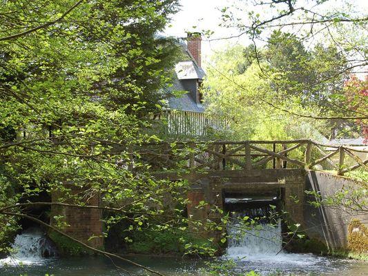 Le Moulin du Saut de la Truite Gite de Thierry Lelong à Hermival-les-Vaux 13 A travers les feuillage