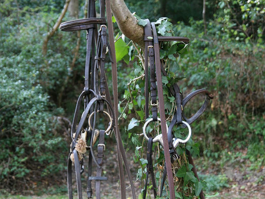 Rênes de cheval