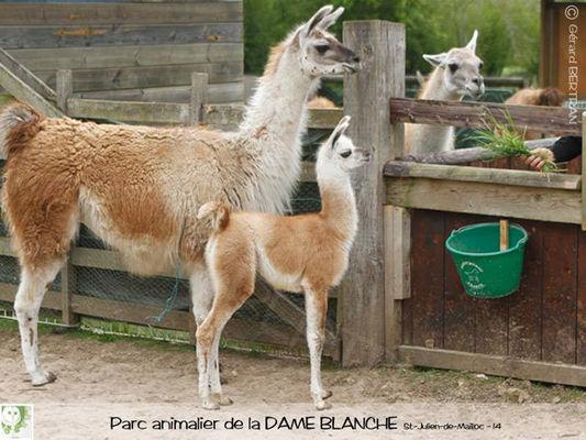 dame-blanche-lisieux