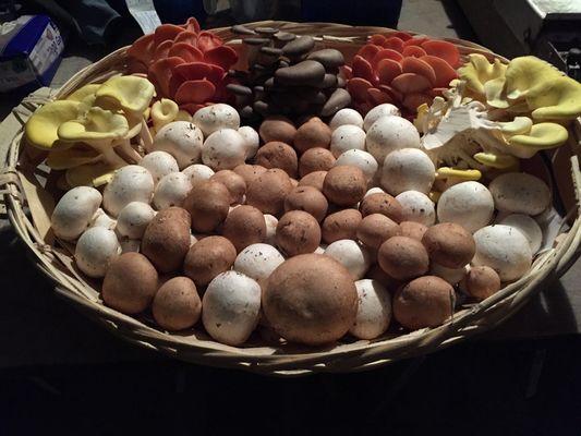 Champignons de Paris, pleurotes et shiitakés d'Orbec