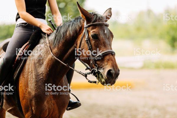 equitation-3
